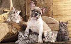 puppy kitten http://blogpaws.com/be-the-change/top-5-reasons-deserve-pet/