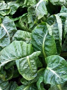 Spinach from CookingChannelTV.com--SUPERFOODS: NUTRIENT-RICH FOODS TO EAT EVERY DAY