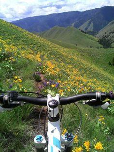 Scenic mountain bike trails. I've got some work to do!