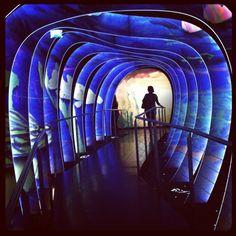 Chamber of Wonder at Kristallwelten in Wattens, Austria