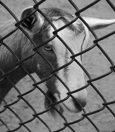 Cape May Zoo, NJ  photograph by Jeneen