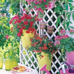 Gardening tips: How to Create Privacy in Your Backyard
