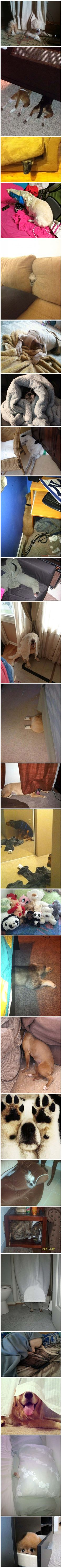 Anyone for hide and seek LOL