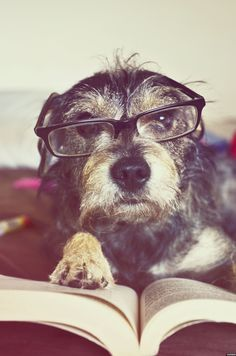 Pets in glasses