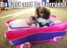 da fast and da furryest #funny #cat #kitten