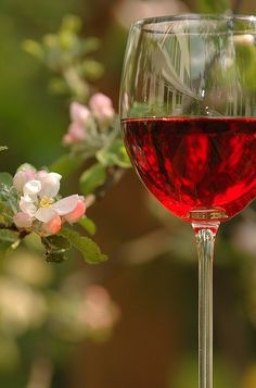 Chilled Rosé...summer in Provence