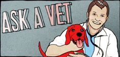 Ask a Vet: How Can You Tell How Old a Dog or Puppy Is? | Dogster