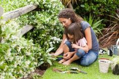 Free Plants! | Stretcher.com - Frugal gardening at its best