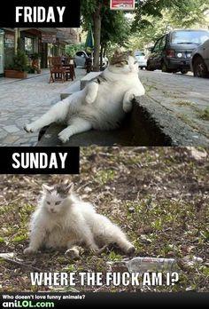 cats, laugh, mondays, giggl, funni