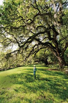 Magnolia Plantation and Gardens, Charleston, South Carolina