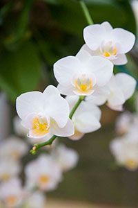Orchids in Your Living Room? - How to See Them Through the Winter