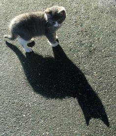 ✯ Kitten Shadow ✯