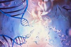Genetically Modifying Humans Via Antibiotics? Something You Need To Know