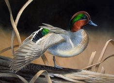 Stretching Green-wing by Misted-Dream on deviantART - Acrylic on Masonite