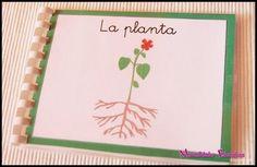 Botánica Montessori - Mini libro Nomenclatura de las partes de la planta