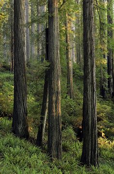 Redwood National Park, California | David Cobb
