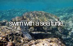 Swim with a turtle :)