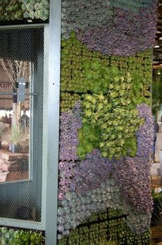 Succulent garden on the sidewall of a chicken coop. Beautiful! #garden