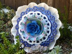 Drought resistant plate flower