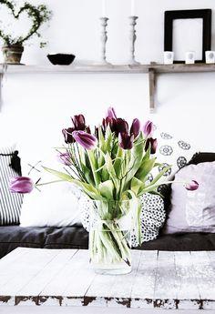 plum tulips