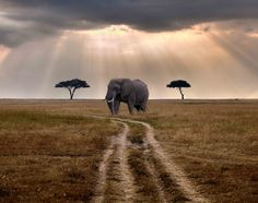 Africa   Elephant on a back road through the Masai Mara National Reserve.   ©James Forsyth