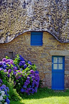 What a lovely little cottage with its hydrangeas and blue door!