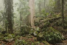 Dorrigo National Park NSW