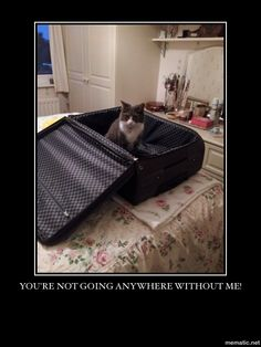 Travel cat. #cat humour.
