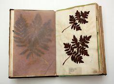 Joanne B Kaar - an artists blog: A book of ferns