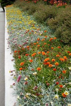 from The Dry Garden: 'Reimagining the California Lawn'