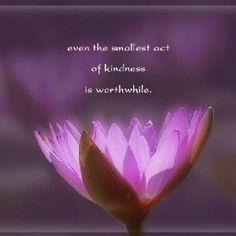 Lotus Flower Poems Quotes