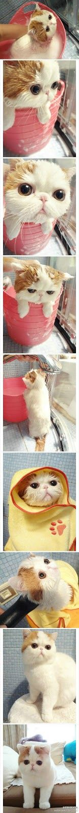 Pictures of Cute cat while giving bath.....(click on picture to see more)