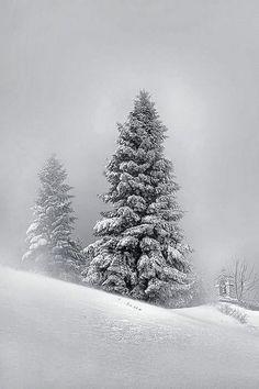 15 Feet Of Pure White Snow - Nymfaio, Greece