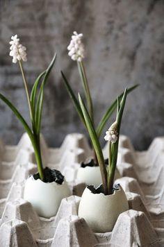 growing plants, spring flowers, idea, egg cups, growing flowers