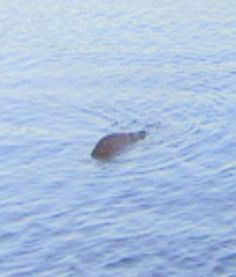 Man Claims to Have Most Convincing Loch Ness Monster Photo Yet - PawNation