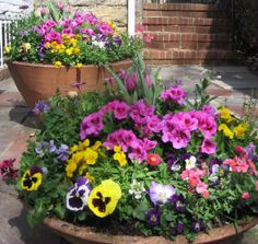 I want these in my flower bed....