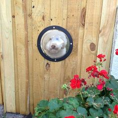 Adorable lookout portal in fence - perfect for your home's guard dog!