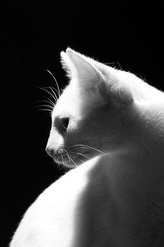 Photo de chat en noir et blanc