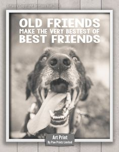 Old Friends Make the Very Bestest Of Best Friends