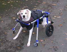 walkin wheels front wheel attachment.  OMG  My dog needs one