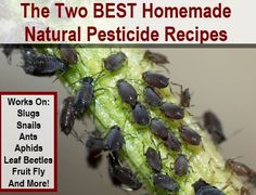 The 2 BEST Homemade Natural Pesticide Recipes