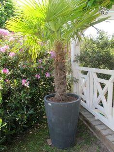 Fa ades maisons landaises rembardes on pinterest 55 pins for Palmier dans pot