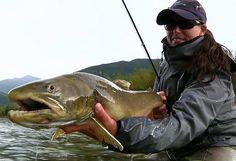 Beckie Clarke Catch Magazine Fernieflyfishing.com fli fish, catch magazin, flyfish hot, fish menageri, thing fish, bull trout