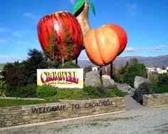cromwell giant fruit