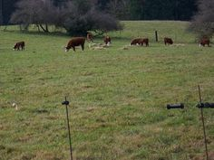 {winter rotational grazing}