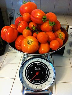 Timing Your Tomatoes…Ready, Set, Grow! Growing Tomatoes in the cool Pacific Northwest #edible #vegetable #gardening