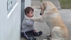 Labrador befriends toddler with Down syndrome, melts hearts