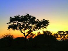 Kruger National Park Sunset at Ngala Private Game Reserve, South Africa