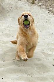 see, I got the tennis ball!