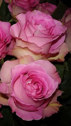 @PinFantasy - Pink Roses ~~ For more:  - ✯ http://www.pinterest.com/PinFantasy/flora-~-flores-flowers/